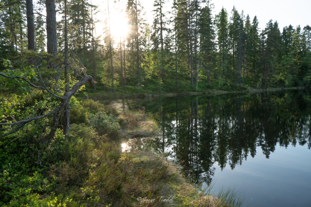 Skogsidyll ved Nordre Aurevannsputten